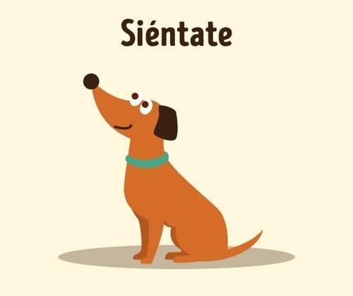 1.- Desarrolla La Inteligencia Oculta De Tu Perro. Brain T