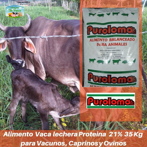 Alimento Para Animales / Lechera Alta Proteína kg