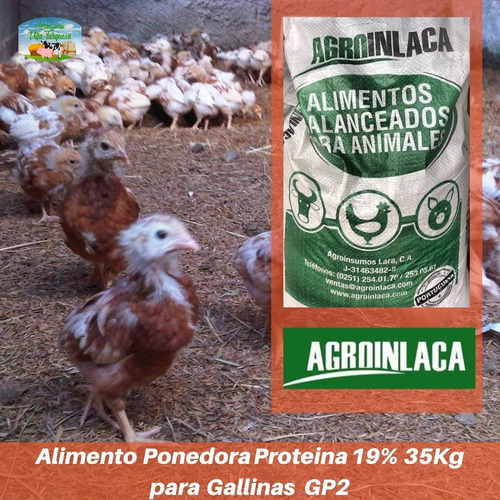 Alimento Para Animales /gallina Ponedora  Kg Gp2